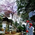 写真: 総州 阿弥陀山 清房院