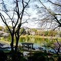 写真: 千葉県 千葉公園