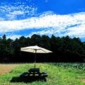 写真: 夏 白いパラソル