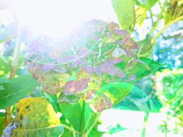 神楽月の幻(ハイキー風)