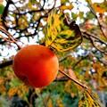 Photos: 秋だね~