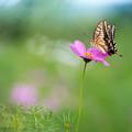 写真: 花から花へ 1