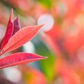 写真: 赤い輝き
