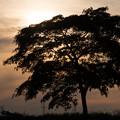 写真: 一本の木