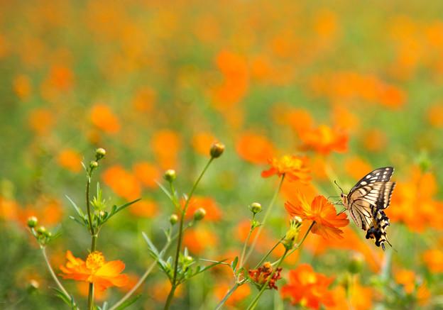 写真: 花から花へ