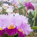 写真: 花のワルツ