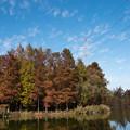 写真: マイフィールドの秋