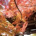 写真: 紅葉を求めて 4
