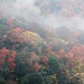 写真: 雨の嵐山