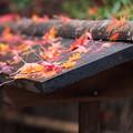 写真: 祇王寺 落ち紅葉