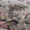 写真: 名残の梅に包まれて
