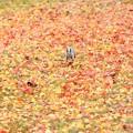 落ち葉の中を走る