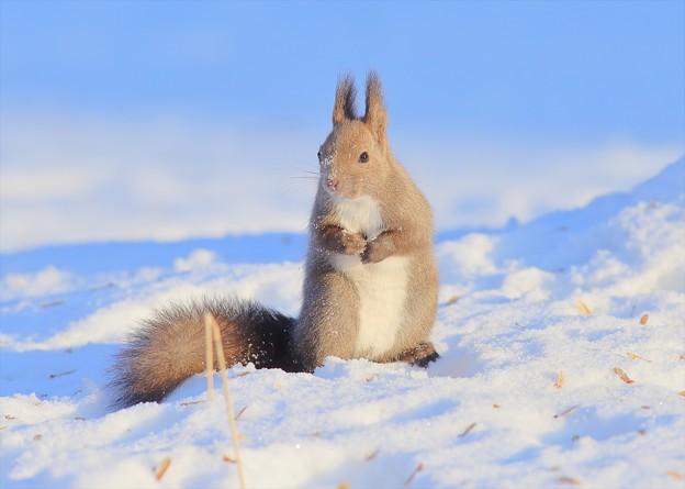 雪の中のリスちゃん