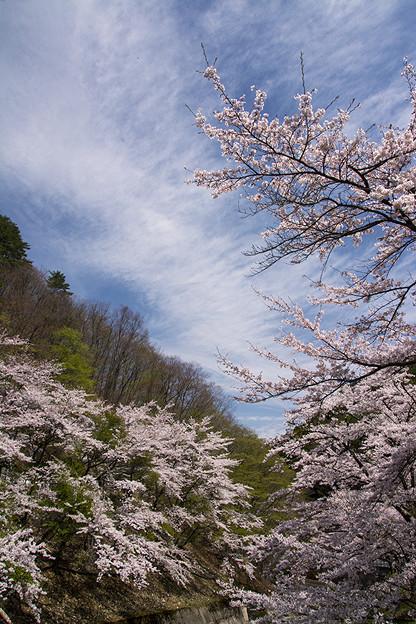 山間の桜2