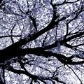 Photos: 生命の樹