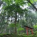 Photos: 新緑の社