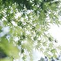Photos: Fresh green