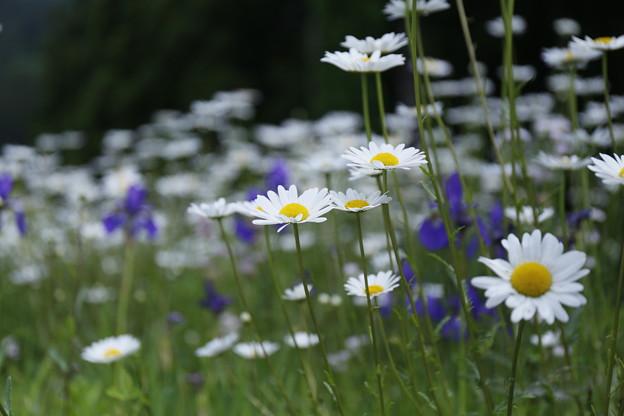 路傍の草花