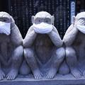 Photos: 密猿