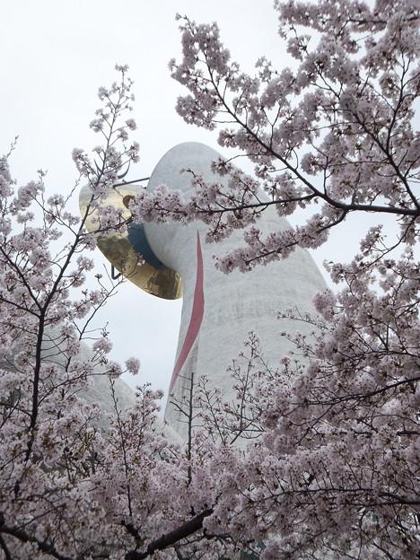 写真: 万博記念公園 桜まつり2017