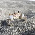 Photos: おにぎり忘れました笑   猿蟹合戦