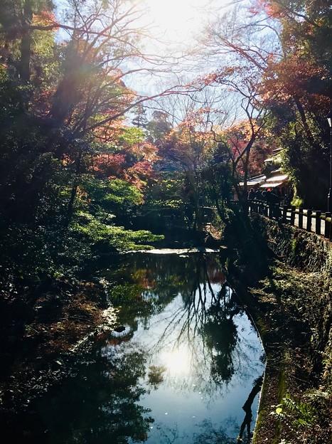 箕面 滝道散歩