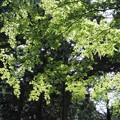 新緑の輝き