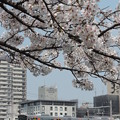 Photos: 大阪環状線 新たな時代へ♯2