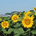 Photos: 真夏の太陽_02