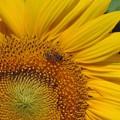 Photos: ミツバチのお仕事
