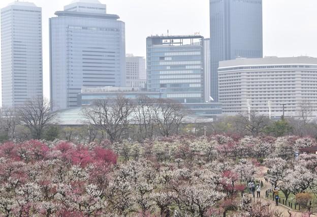 梅2020_大阪城公園_04