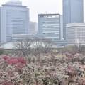 Photos: 梅2020_大阪城公園_04
