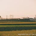 写真: 黄金色の平野を突っ走るSL人吉。