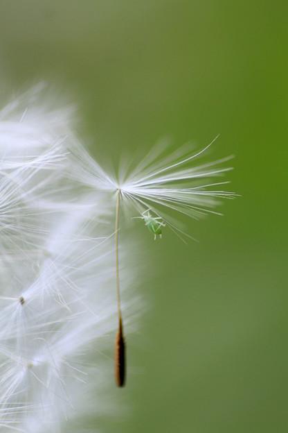 写真: 春風に乗って~♪
