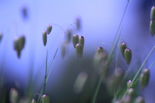 写真: 風に吹かれて~♪