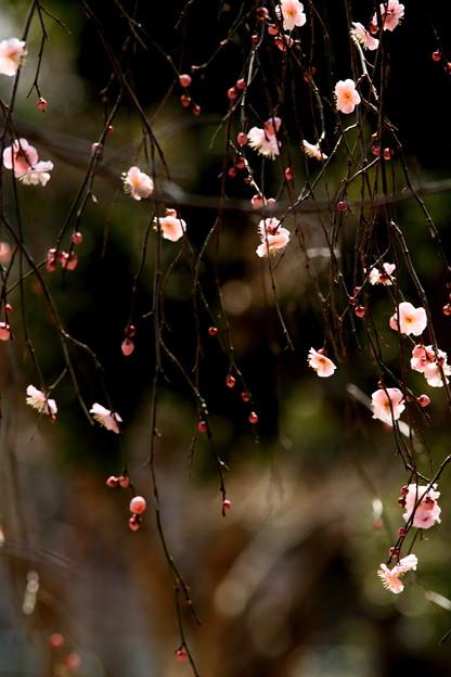春風の囁き