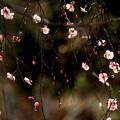 写真: 春風の囁き