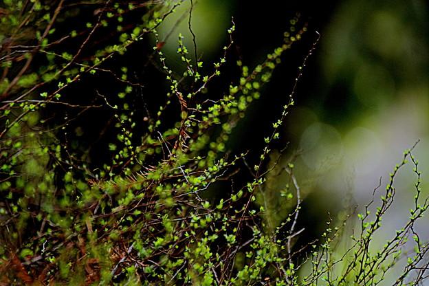 写真: 春の息吹