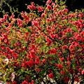 写真: 春の花束