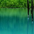 写真: 水色の雨~♪