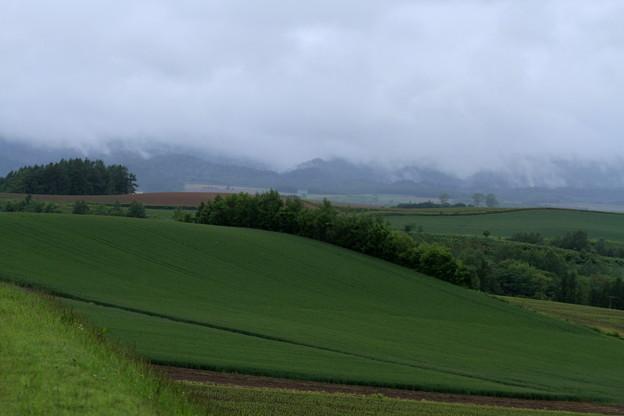 Photos: Rainy hill