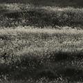 写真: 秋に埋もれたい~♪