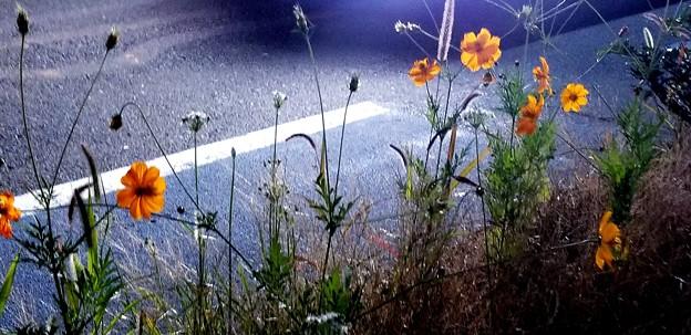 Photos: headlight
