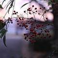 透明な秋の夕暮れ