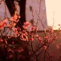 夕陽の欠片
