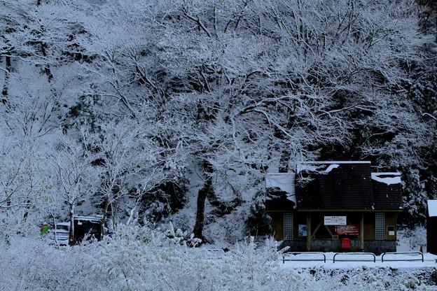 11月に降る雪