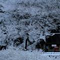 Photos: 11月に降る雪