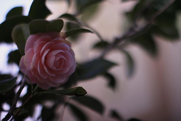 Photos: 早春の旅立ち