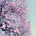 Photos: 春の詩