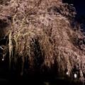 Photos: 夢一夜~♪